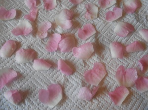 Petals drying on kitchen roll