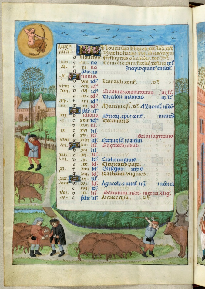 The British Library, Isabella Breviary. Additional 18851, f. 6v: calendar page for November. The pigs are on their way to market. I think something bad is going to happen to them, also to the cows on the right. I like the way the tall tree in front of the church just has a few leaves left. Mine looks like that too.